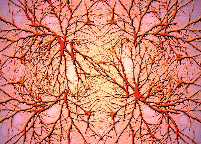 network_brain_700